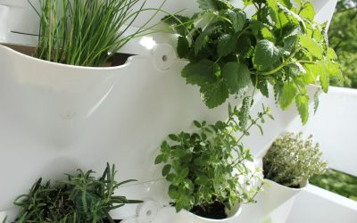 Urban Gardening – A Beginners Guide by Samantha Rose Hunt